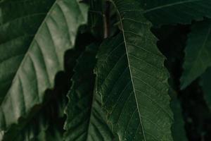close-up de folhas à noite