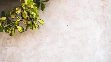 superfície de textura de gesso branco com folhas verdes