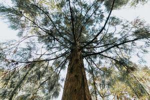 árvore em uma floresta foto