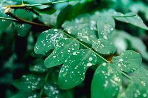 gotas de chuva nas folhas verdes