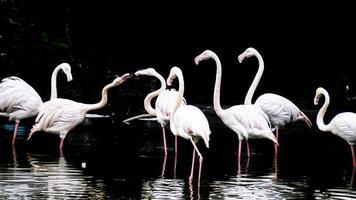 um grupo de flamingos em uma lagoa