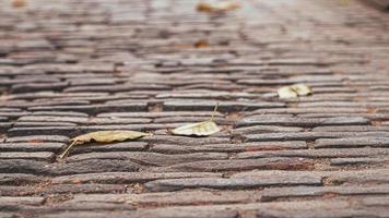 foco seletivo do pavimento de paralelepípedos de outono