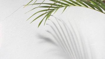 folhas de palmeira verde com sombra no fundo branco foto