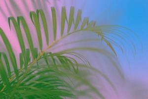 fundo colorido de folha de palmeira tropical