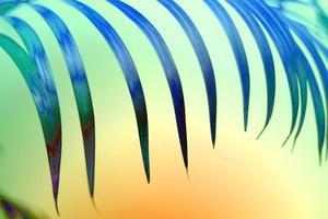 fundo colorido de folha de palmeira tropical foto
