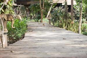 calçadão de madeira em um jardim