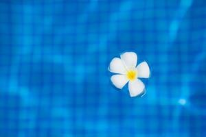 flor de plumeria flutuando na água azul foto