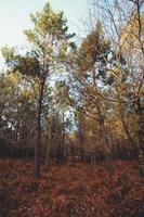 floresta super colorida com arbustos coloridos