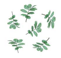 folhas isoladas em fundo branco foto