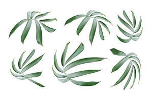 folhas verdes isoladas em fundo branco