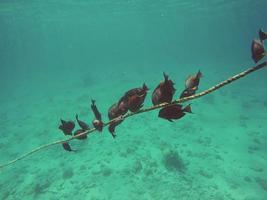 peixe perto de uma corda