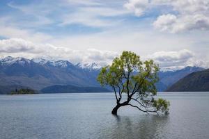 árvore em um corpo de água foto
