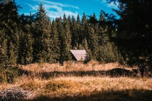 casa de madeira marrom no meio da floresta