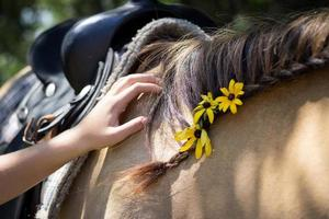 jovem acariciando um cavalo foto