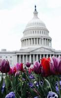 flores em frente ao capitólio dos estados unidos