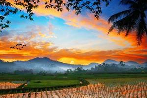 nascer do sol sobre o campo de arroz
