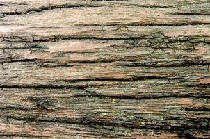 textura de madeira rústica foto