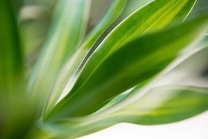 close-up de uma folha de planta com bokeh de fundo foto