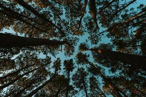 fundo feito de todos os picos das árvores