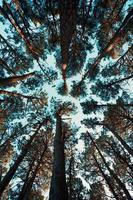 um fundo feito de todos os picos das árvores com um céu azul brilhante