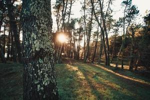 floresta durante um pôr do sol