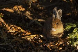 coelho na floresta foto