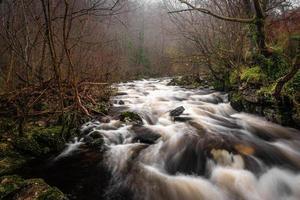 rio correndo e árvores foto