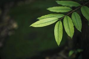 close-up de folhas verdes em fundo de folha desfocado foto