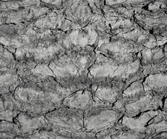 fundo abstrato de textura de pedra foto