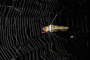 aranha na teia de aranha