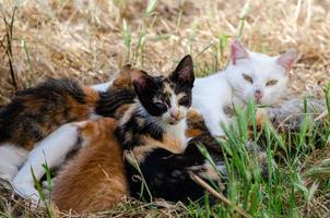 gatinhos se alimentando de sua mãe
