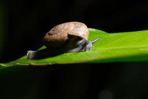 caracol em uma folha verde