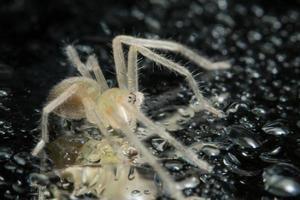 aranha, foto close-up
