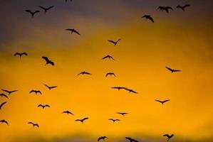 silhueta de pássaros voando foto
