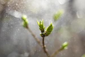 folhas verdes em uma muda