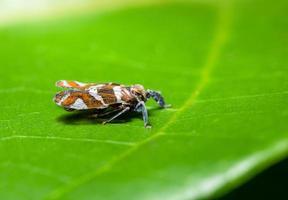 borboleta em uma folha foto