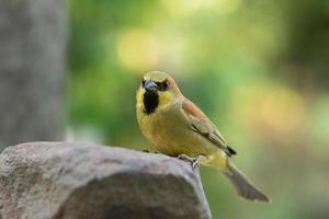 pássaro em uma rocha foto