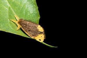 mariposa em uma folha foto