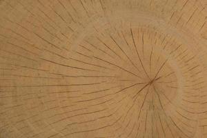 fundo de textura de madeira foto