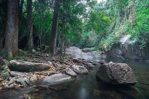 floresta no parque nacional da cachoeira khao chamao