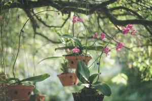 orquídeas rosa em vaso pendurado