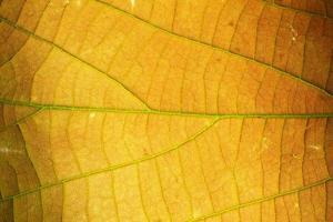 fundo de folha, foto de close-up