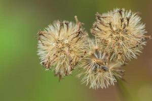 flor branca, foto close-up