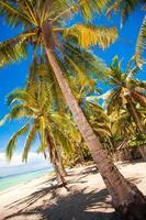 praia tropical com belas palmeiras e areia branca foto