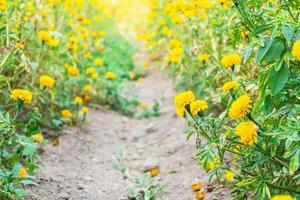 caminho entre flores