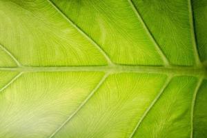 padrão de folha verde foto