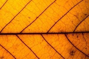 close-up de folha amarela foto