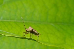 inseto assassino marrom em uma planta foto
