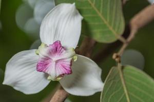 close-up de flor branca