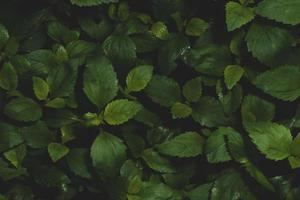 fundo de folhas escuras